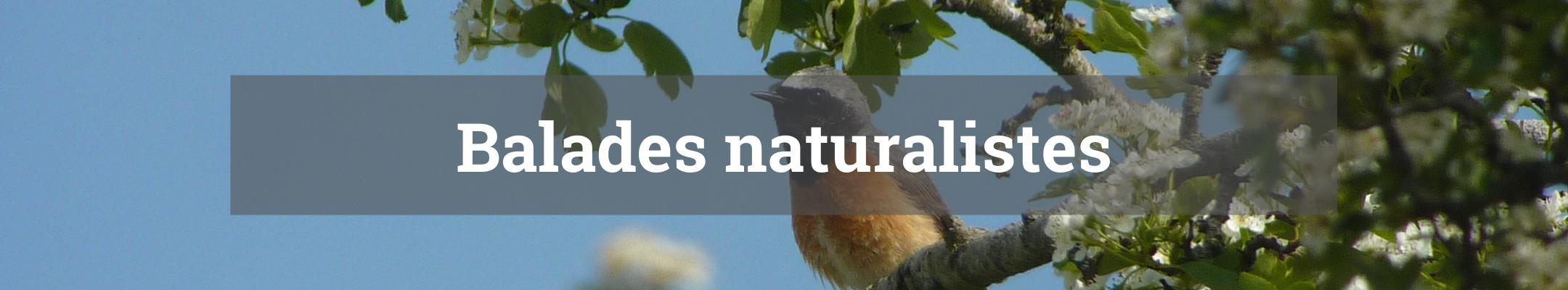 balades naturalistes titre